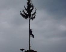 Baum 99-3.JPG