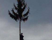 Baum 99-5.JPG