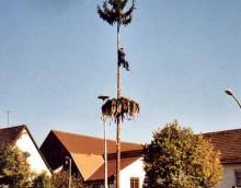 Baum99-7.JPG